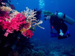 Taveuni Palms Fiji Diving